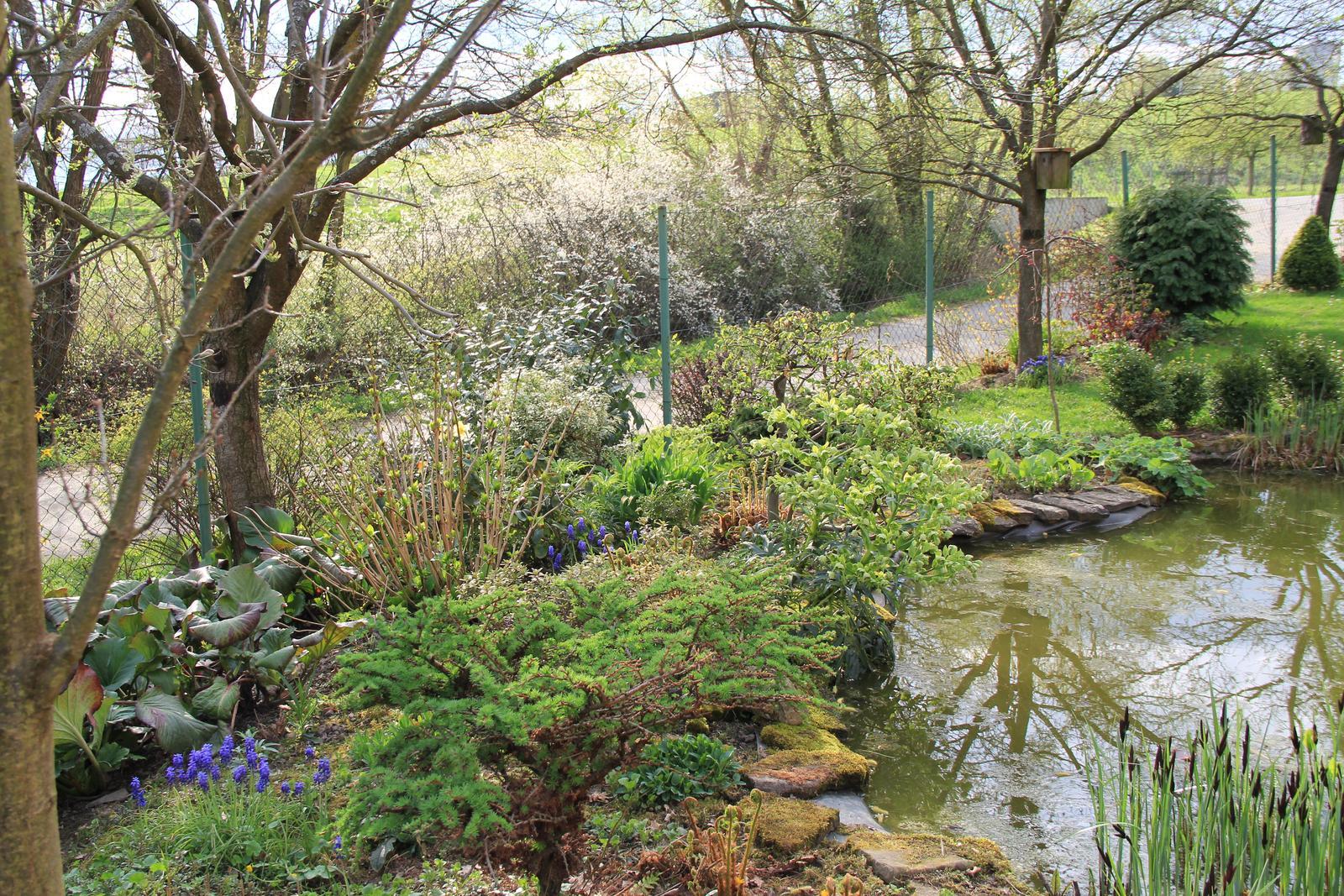 """Okrasná zahrada - můj malý """"ráj"""" - Obrázek č. 65"""
