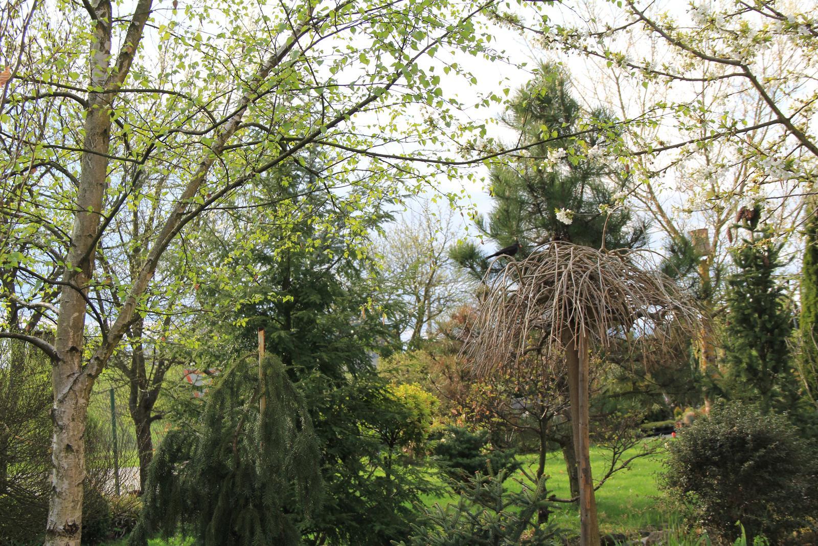 """Okrasná zahrada - můj malý """"ráj"""" - Obrázek č. 68"""