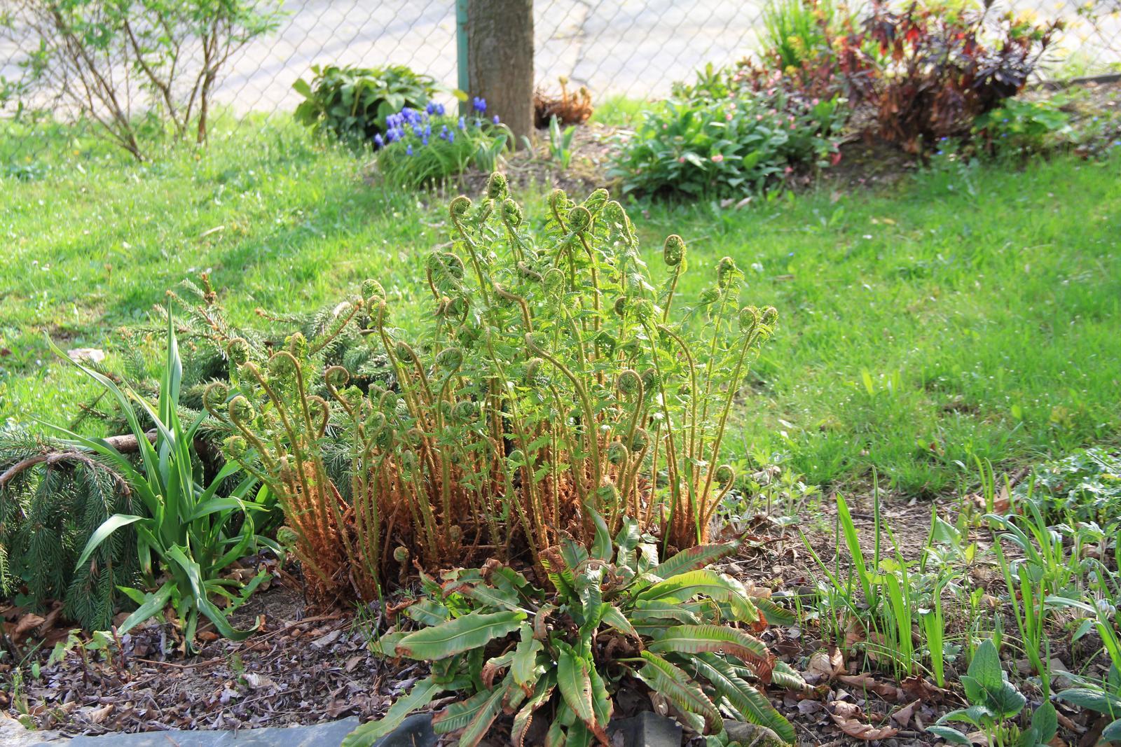"""Okrasná zahrada - můj malý """"ráj"""" - Obrázek č. 70"""