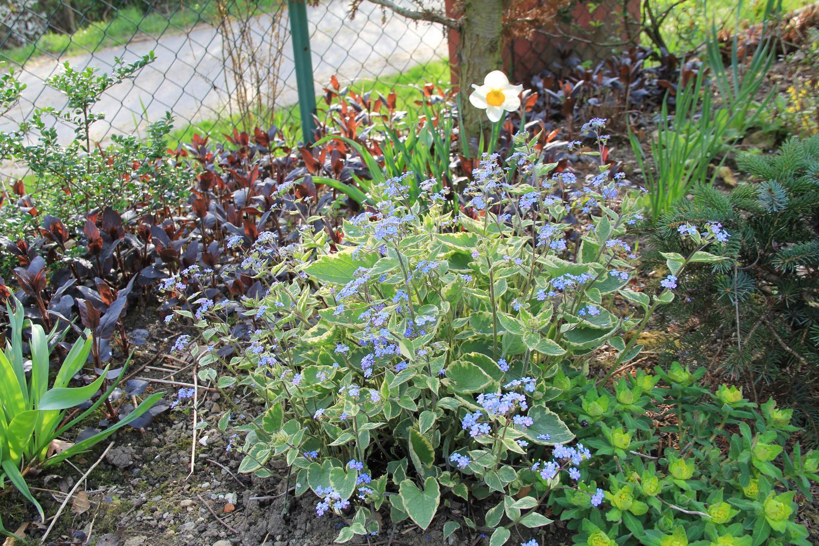 """Okrasná zahrada - můj malý """"ráj"""" - Obrázek č. 72"""