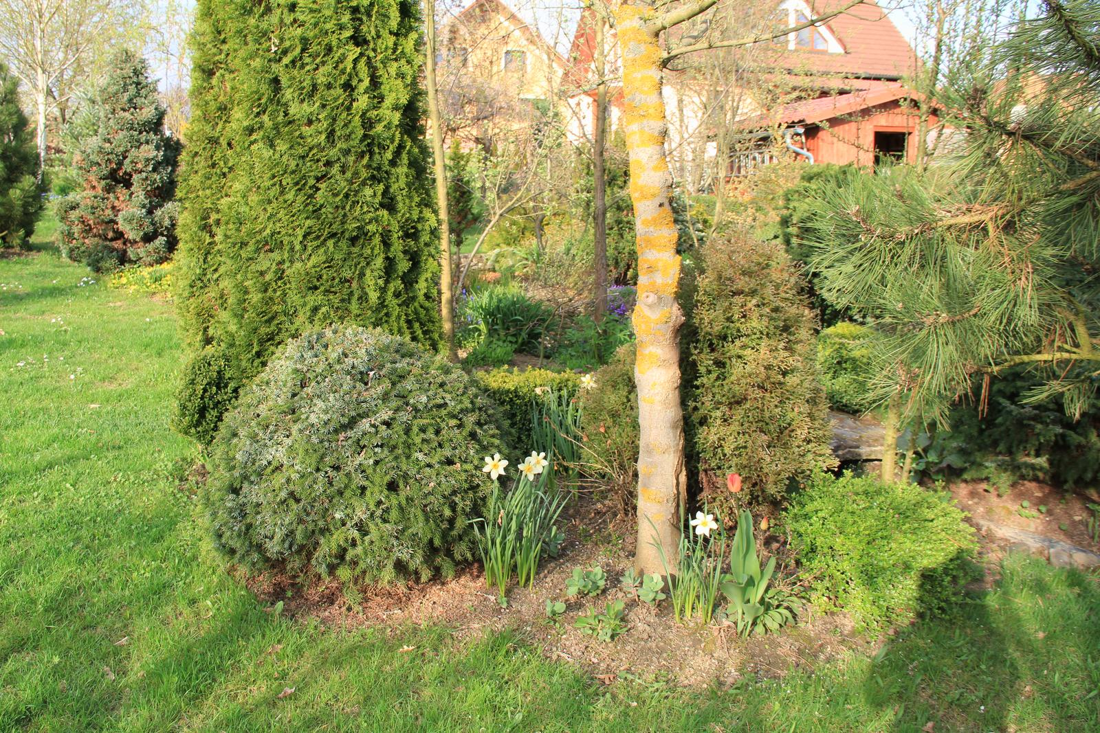 """Okrasná zahrada - můj malý """"ráj"""" - Obrázek č. 73"""