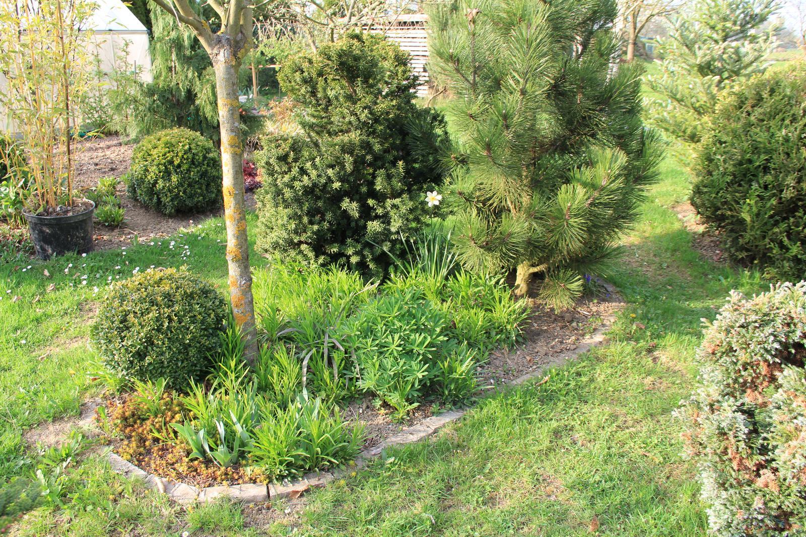 """Okrasná zahrada - můj malý """"ráj"""" - Obrázek č. 74"""