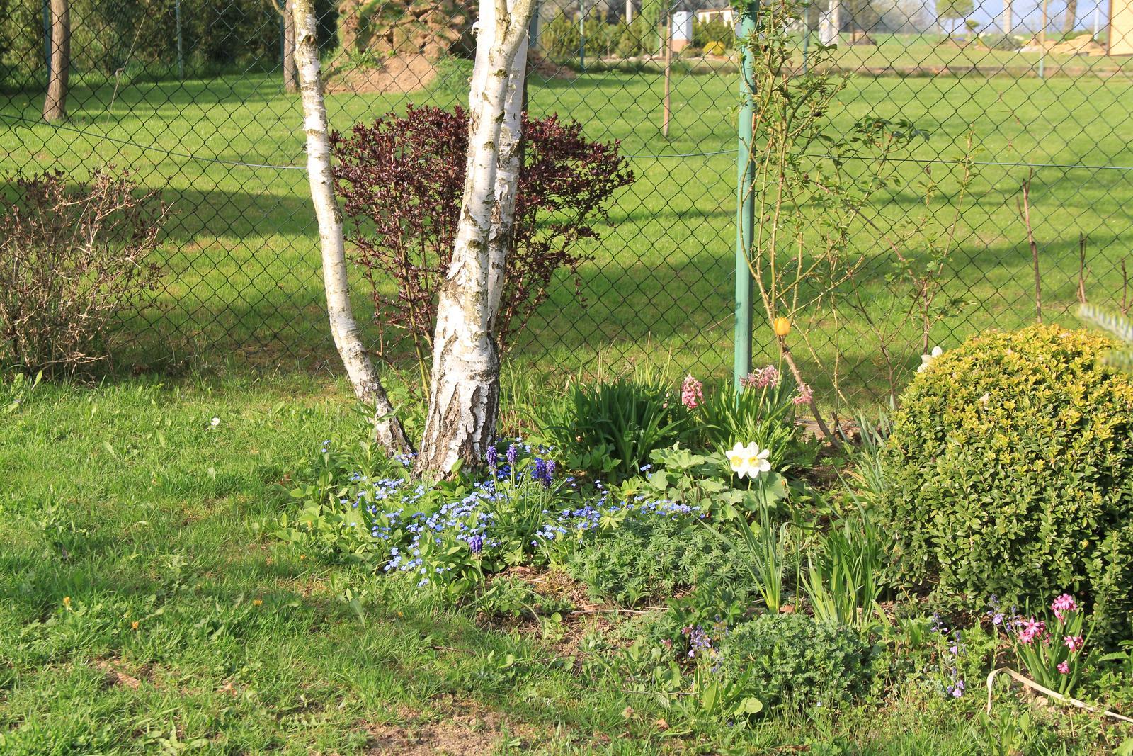 """Okrasná zahrada - můj malý """"ráj"""" - Obrázek č. 75"""