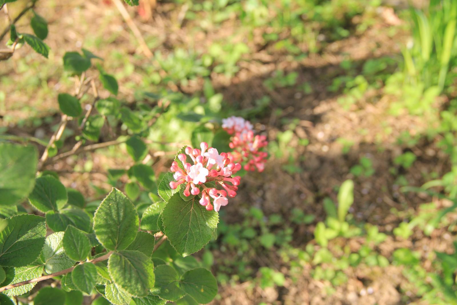 """Okrasná zahrada - můj malý """"ráj"""" - Obrázek č. 77"""