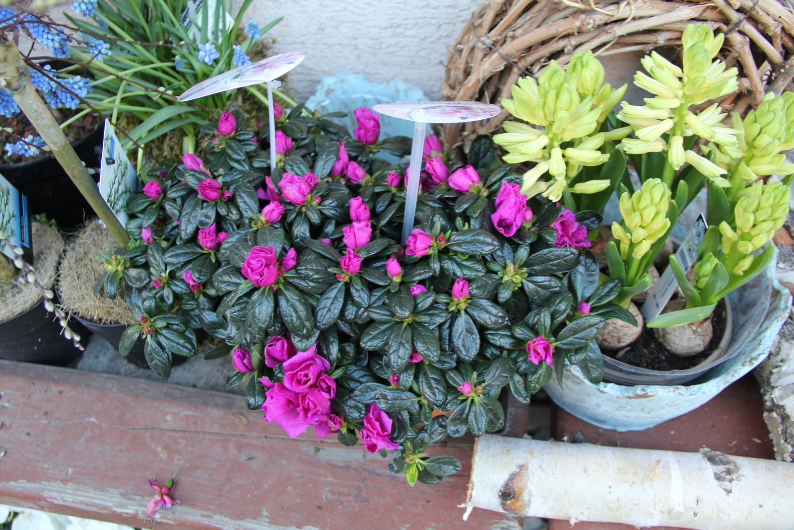 """Okrasná zahrada - můj malý """"ráj"""" - Obrázek č. 79"""