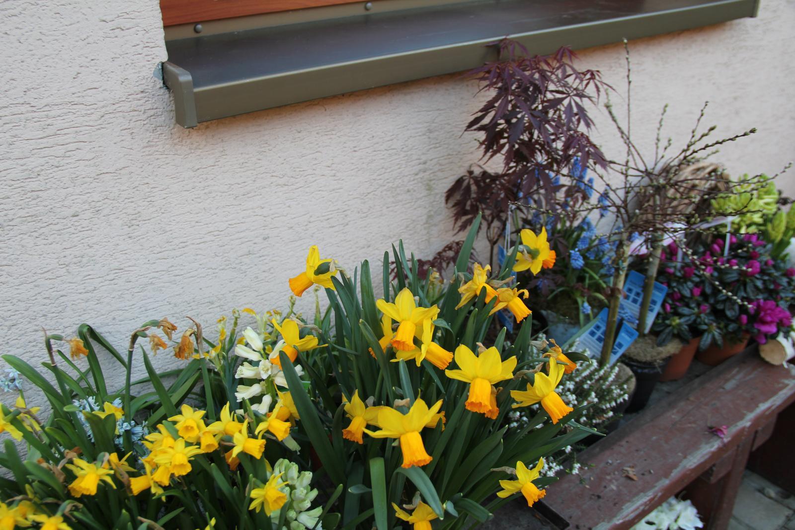 """Okrasná zahrada - můj malý """"ráj"""" - Obrázek č. 80"""