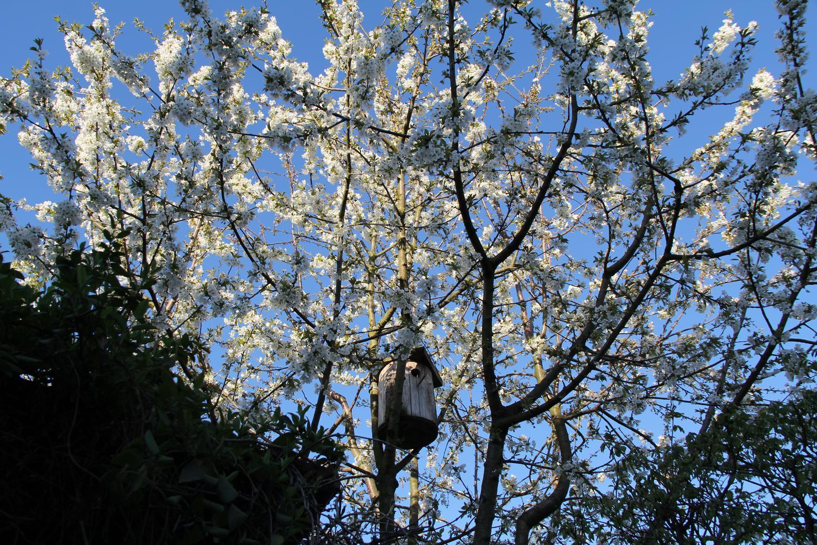 """Okrasná zahrada - můj malý """"ráj"""" - Obrázek č. 81"""