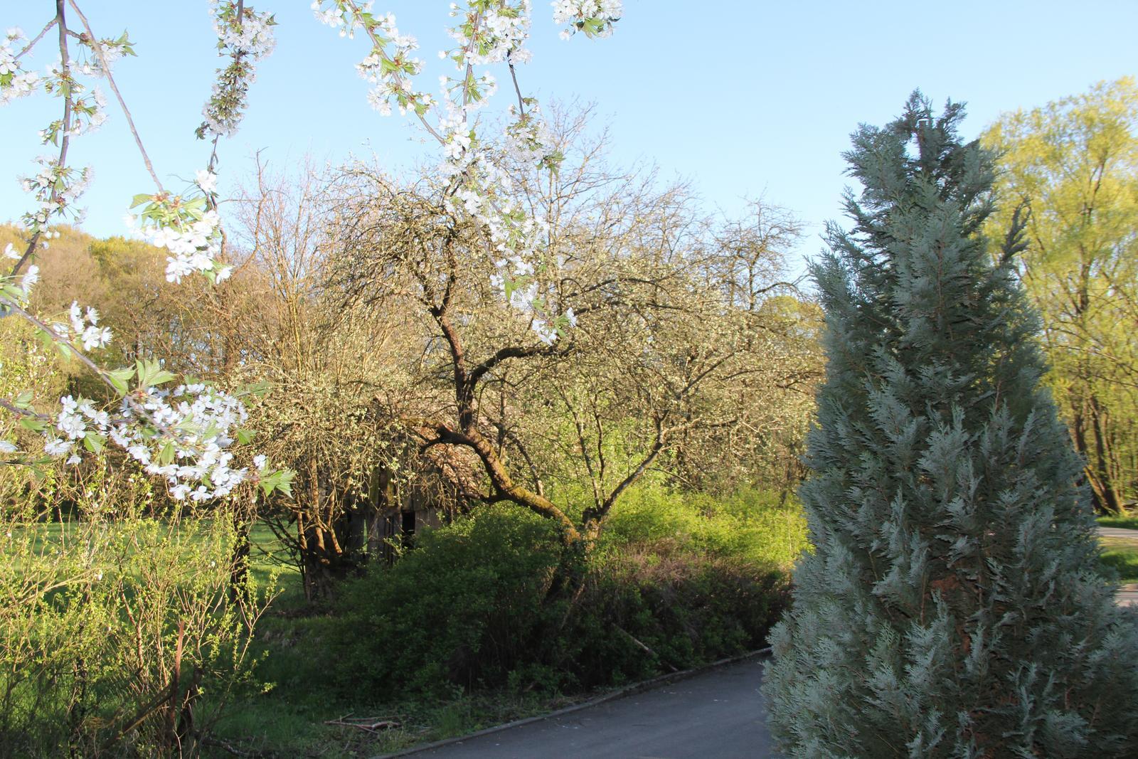 """Okrasná zahrada - můj malý """"ráj"""" - Obrázek č. 83"""