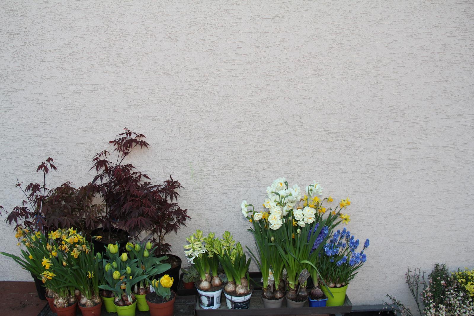 """Okrasná zahrada - můj malý """"ráj"""" - Obrázek č. 86"""