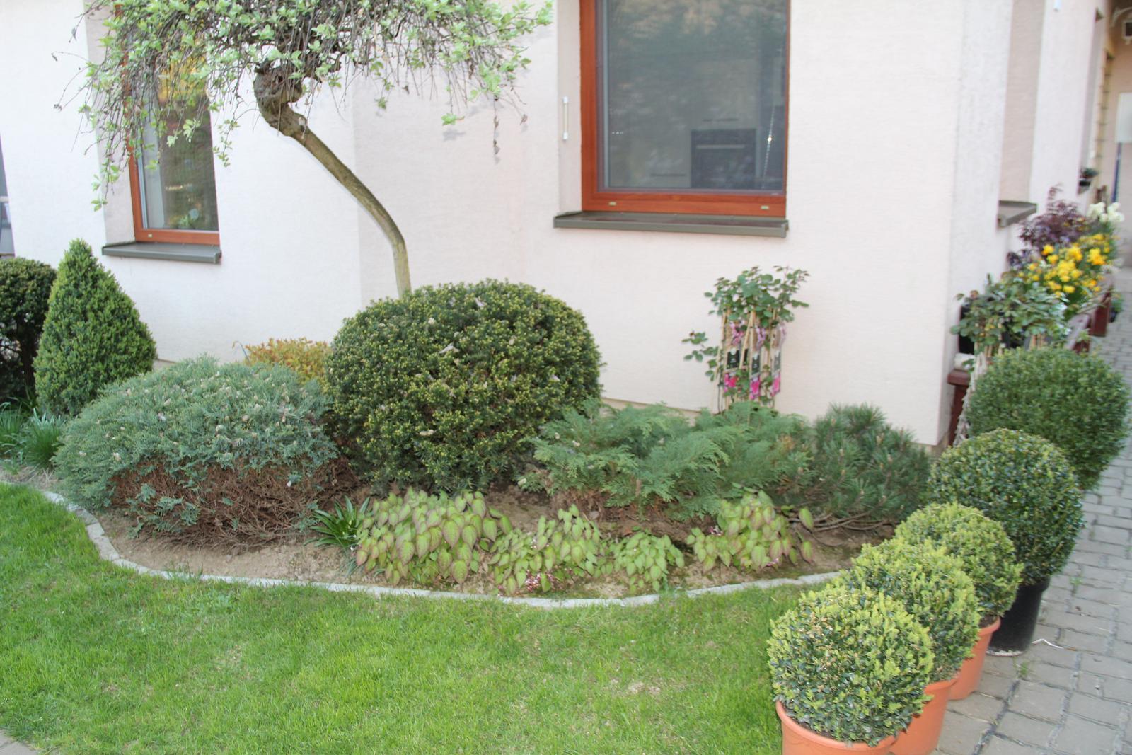 """Okrasná zahrada - můj malý """"ráj"""" - Obrázek č. 90"""