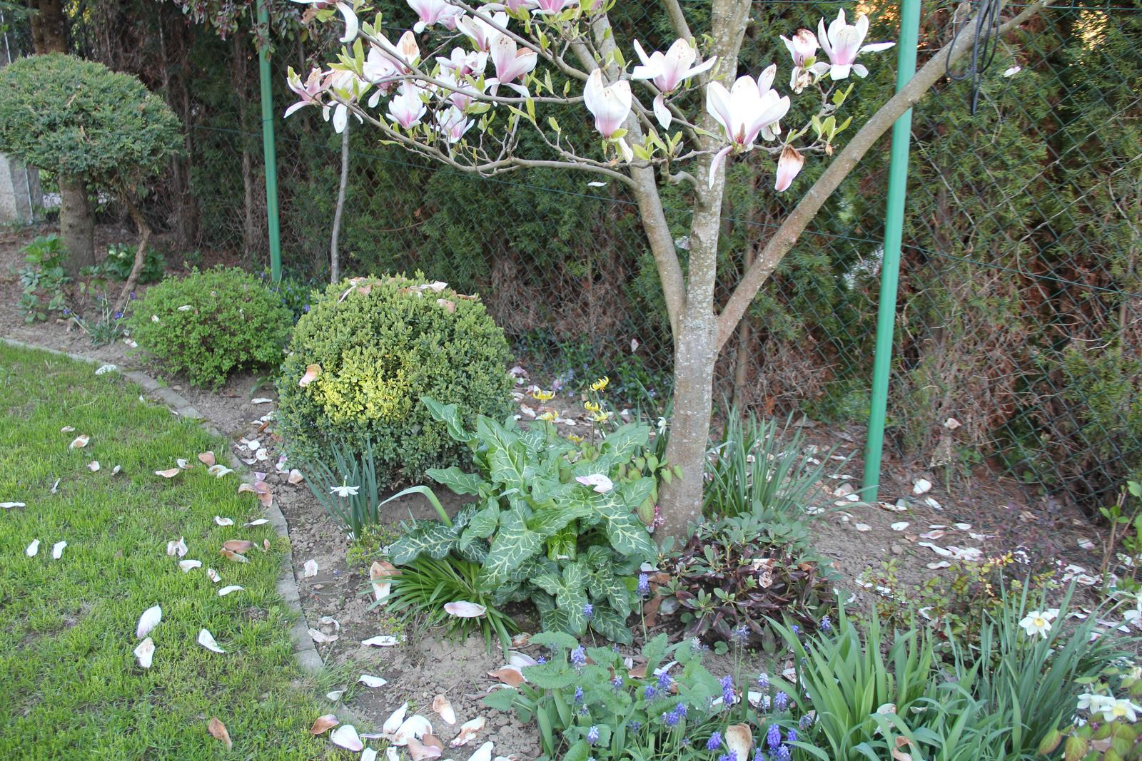 """Okrasná zahrada - můj malý """"ráj"""" - Obrázek č. 95"""
