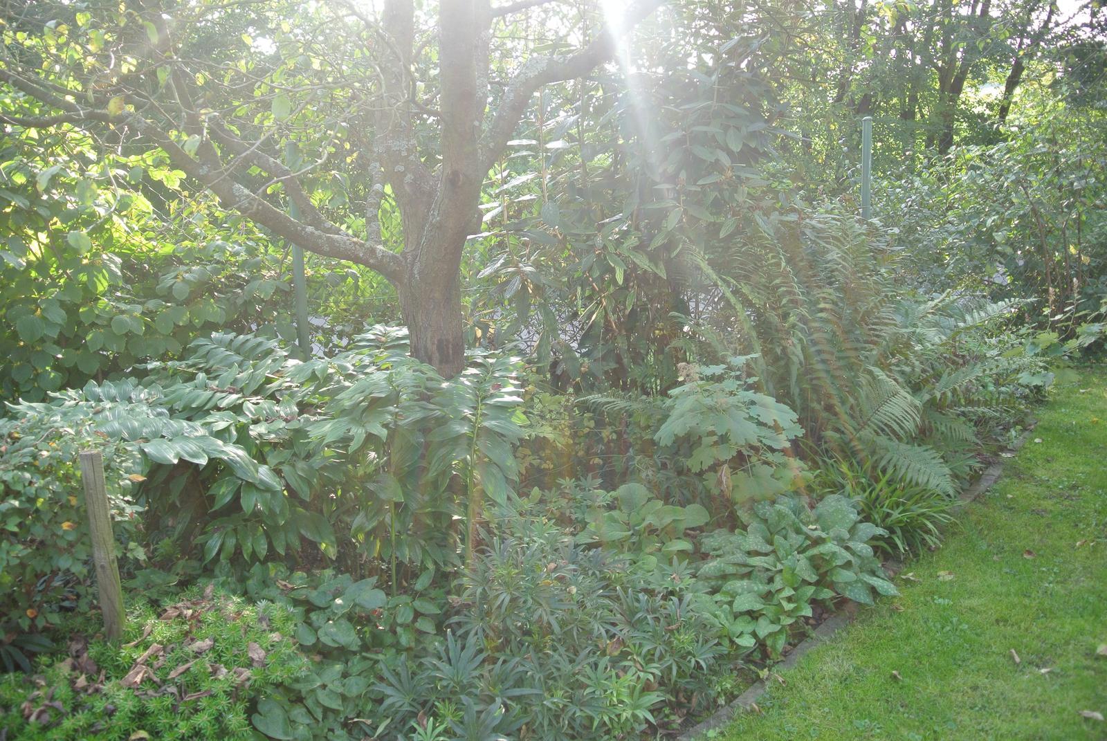 """Okrasná zahrada - můj malý """"ráj"""" - Obrázek č. 96"""
