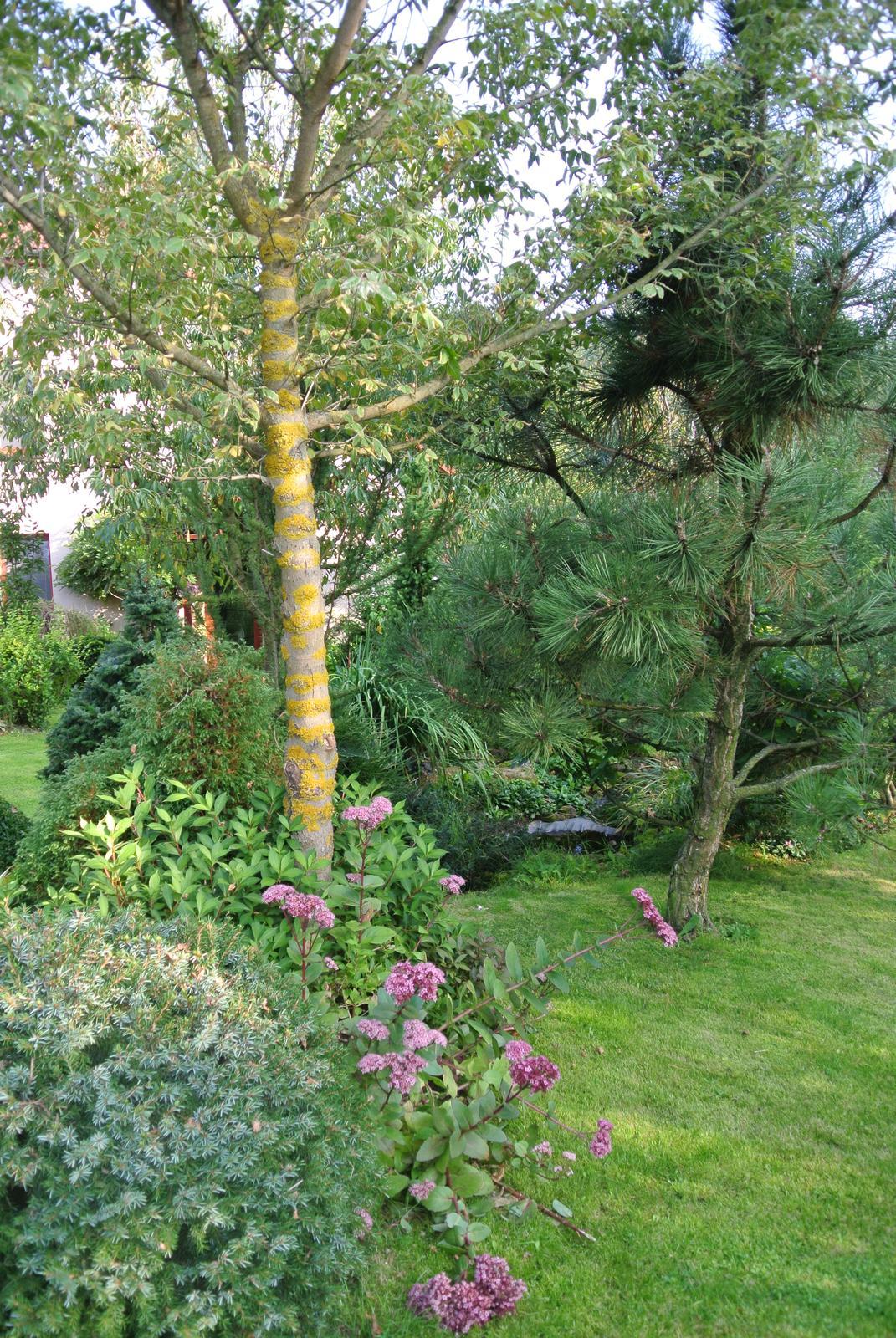 """Okrasná zahrada - můj malý """"ráj"""" - Obrázek č. 99"""