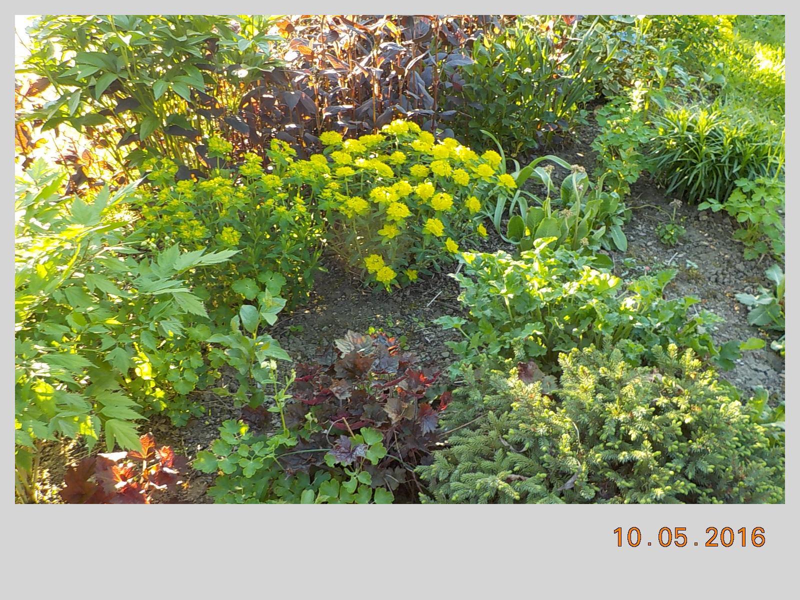 """Okrasná zahrada - můj malý """"ráj"""" - Obrázek č. 118"""