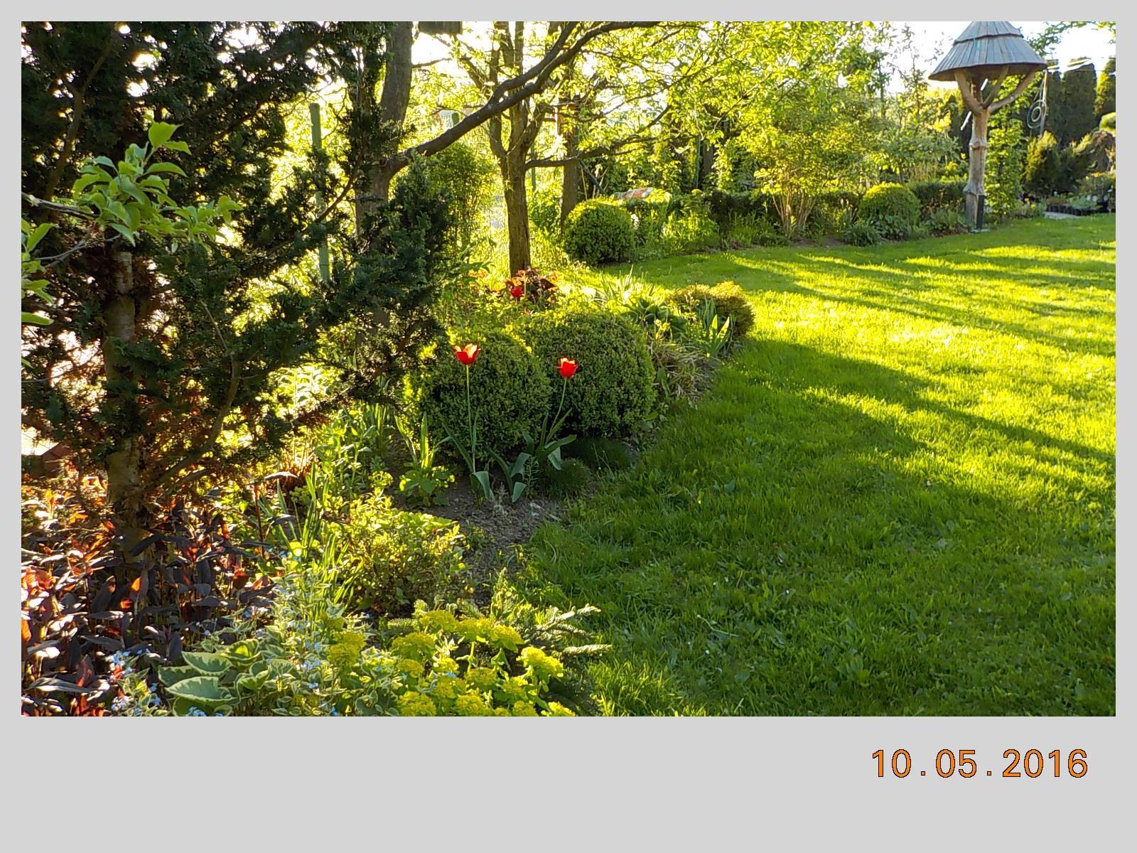 """Okrasná zahrada - můj malý """"ráj"""" - Obrázek č. 119"""