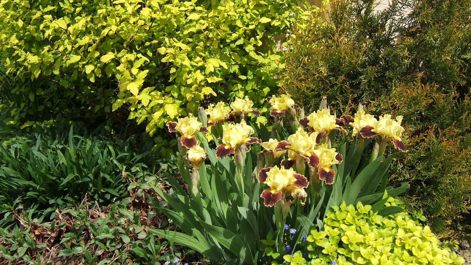 """Okrasná zahrada - můj malý """"ráj"""" - Obrázek č. 141"""