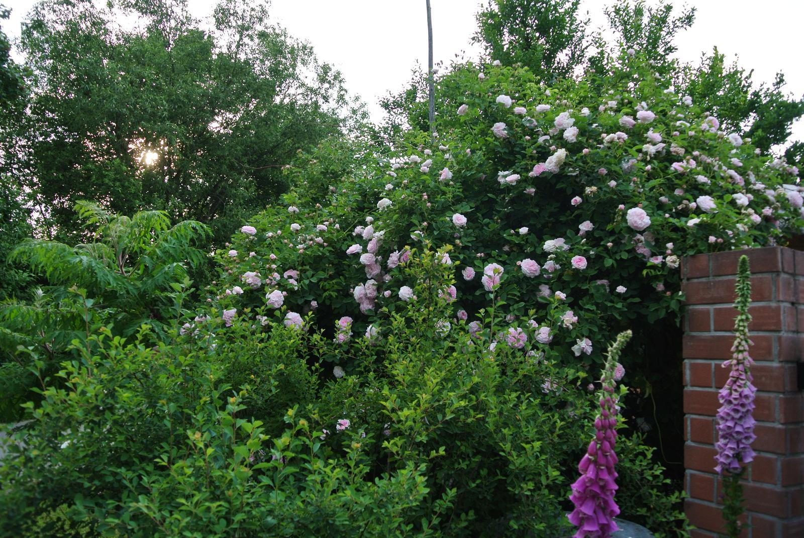 """Okrasná zahrada - můj malý """"ráj"""" - Obrázek č. 188"""