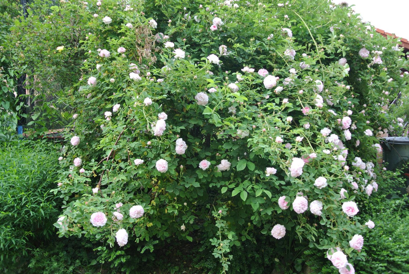 """Okrasná zahrada - můj malý """"ráj"""" - Obrázek č. 189"""