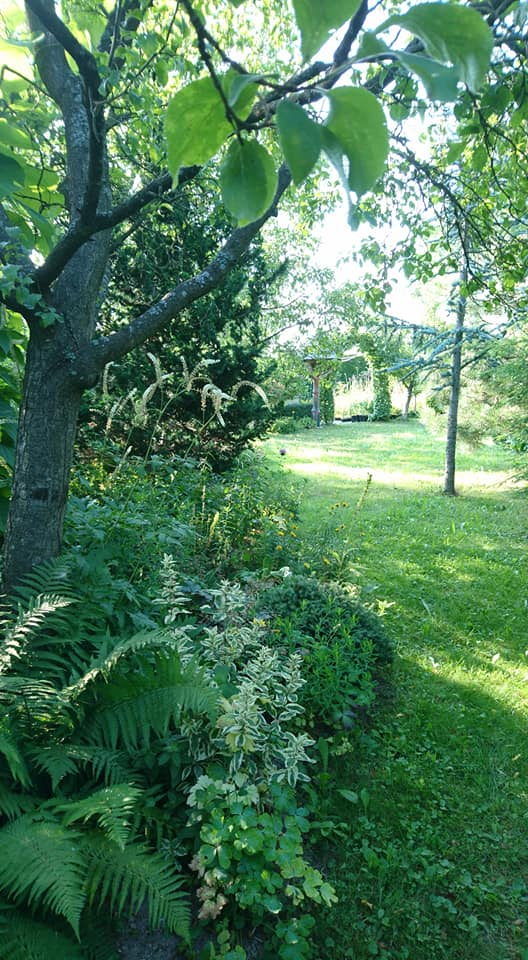 """Okrasná zahrada - můj malý """"ráj"""" - Letošní sucho zas stojí zato, všecko zasychá, květy odpadávají ještě před nakvetením :-(."""