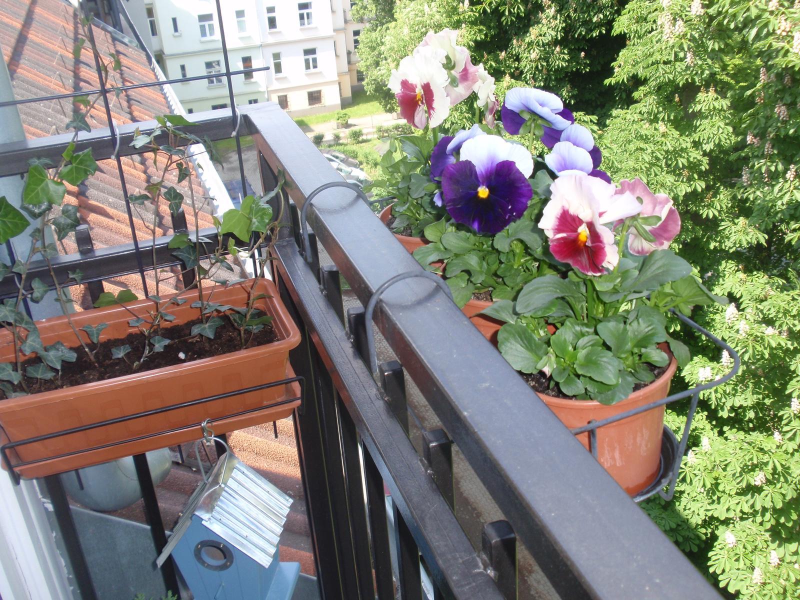 Balkónové radosti 🌹 - Obrázok č. 30