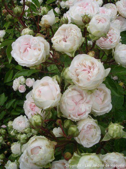 Maisons 💛 jardins 💚 fleurs 💜 - Obrázok č. 19