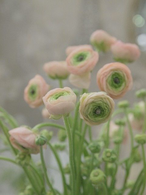 Maisons 💛 jardins 💚 fleurs 💜 - Obrázok č. 14