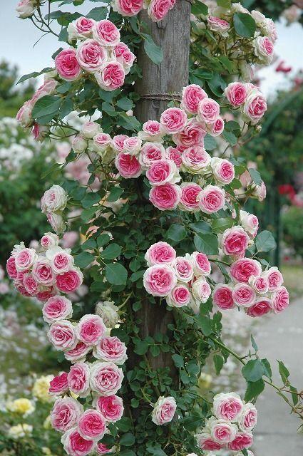 Maisons 💛 jardins 💚 fleurs 💜 - Obrázok č. 20