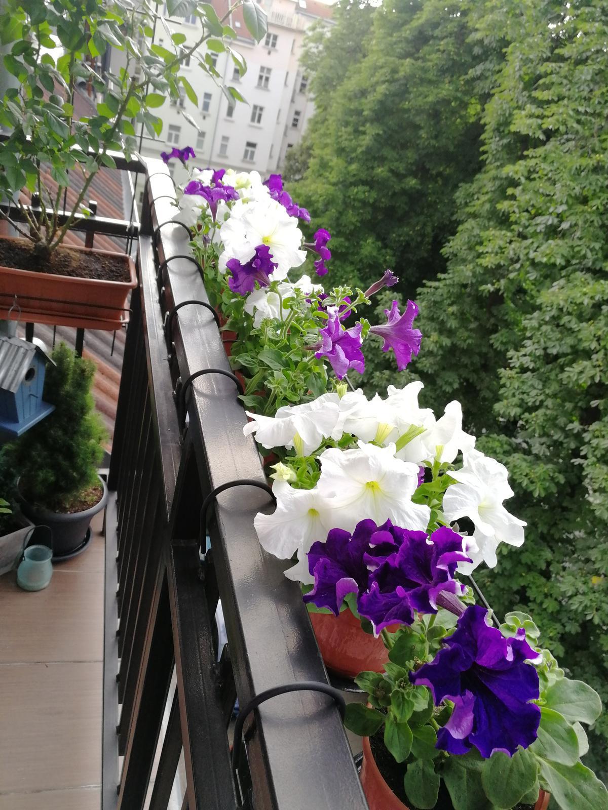 Balkónové radosti 🌹 - Obrázok č. 62