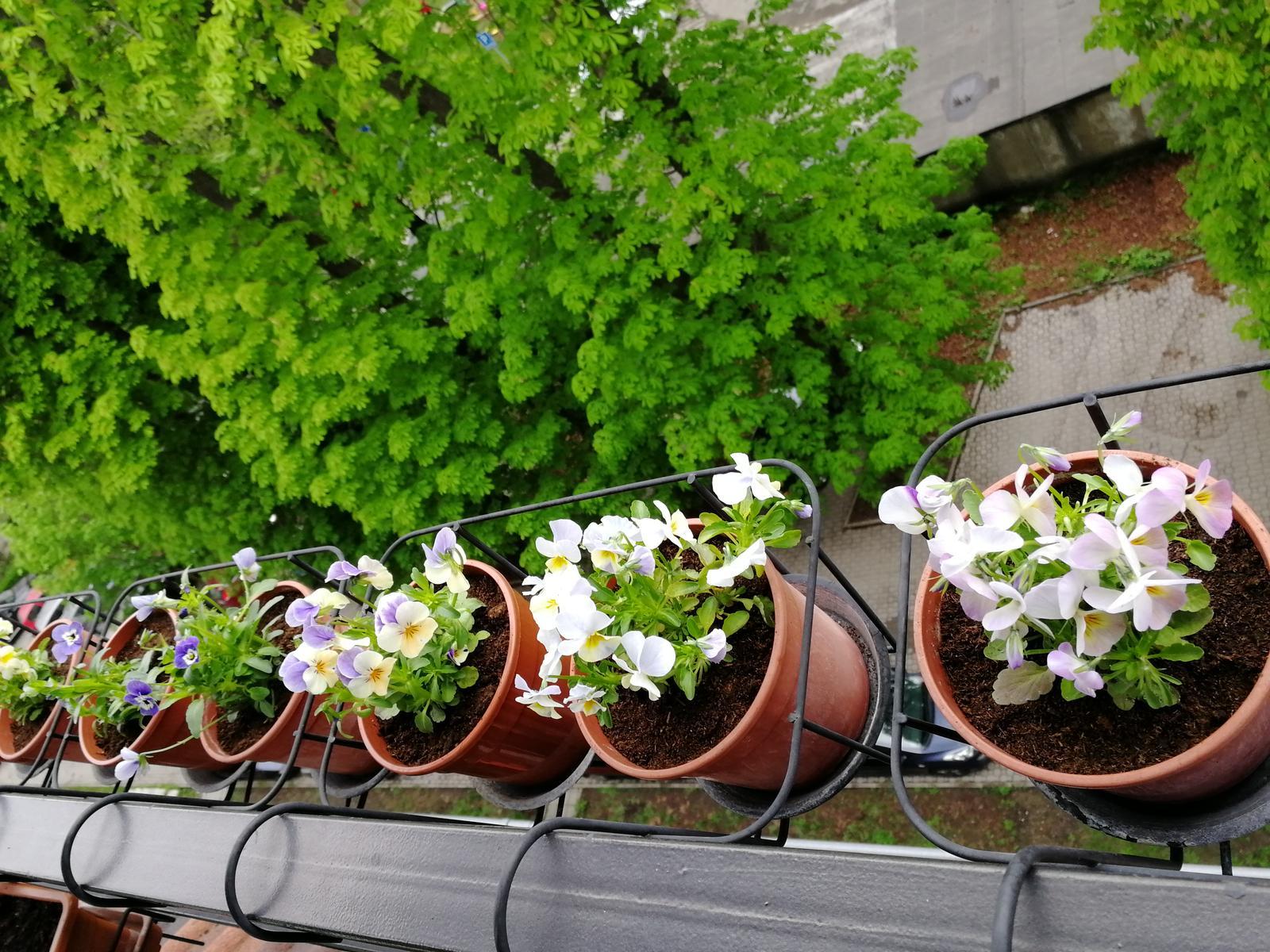 Balkónové radosti 🌹 - Bez nich by nebola pre mňa jar 😘