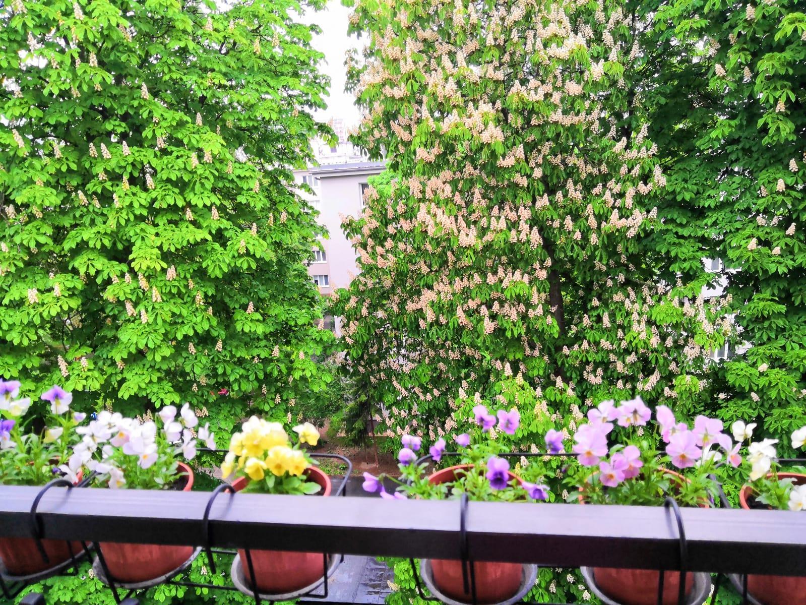 Balkónové radosti 🌹 - Obrázok č. 87
