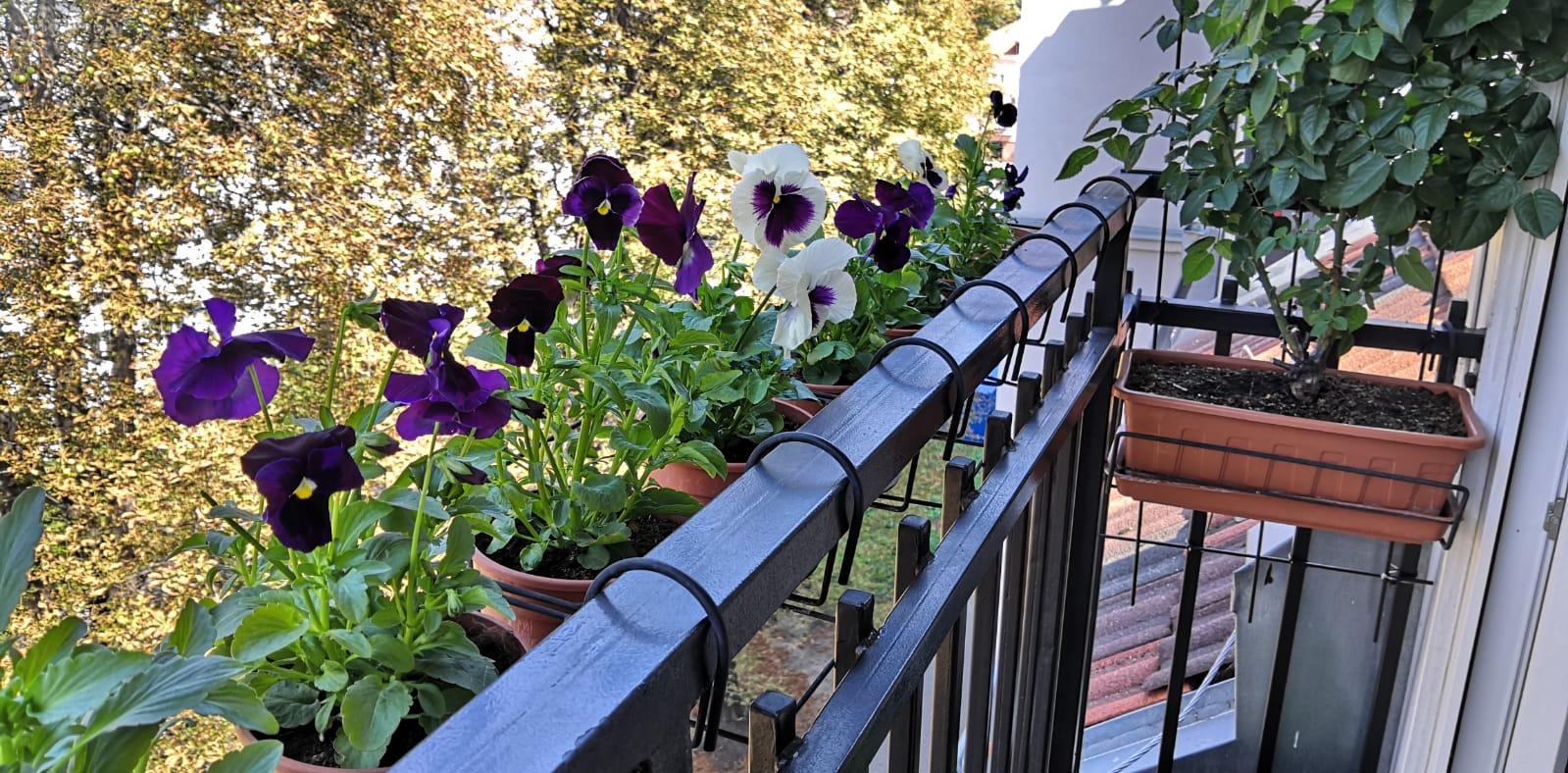 Balkónové radosti 🌹 - A po lete opať jar :-)