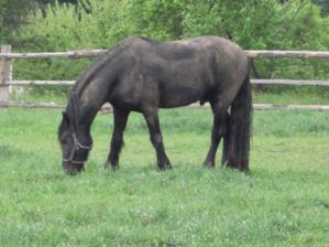 Jedno z nejkrášnějších zvířat na farmě.