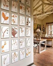 herbár na stene