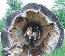 Tunel z vydlabaneho kmeňa... ktovie, ako to ošetriť aby sa v tom nemnožila háveď?