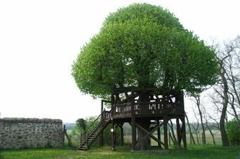 Niečo pre pohodlnejších ... Mimochodom, v 18.storočí v Bratislavskej Pálffyovskej záhrade stála okolo pamatnej lipy podobná konštrukcia- panstvo z nej ovoniavalo, ked lipa kvitla...