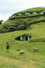 Bunkre pre novozélandské ovečky