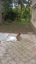 nám vchod do domu nestráži pes ani mačka ale Lízina a Karlík :D