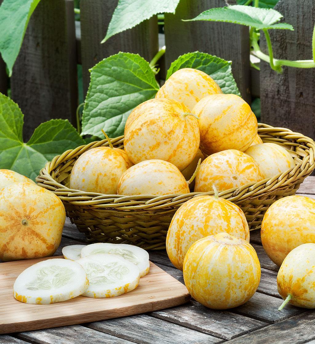Uhorka Lemon - Obrázok č. 1
