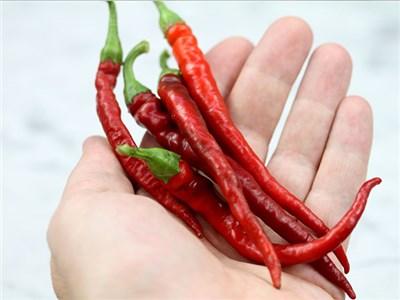 Paprika Cayenne long thin - štipľavá - Obrázok č. 1