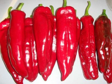 Paprika Corno di toro rosso - Obrázok č. 1