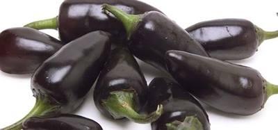 Paprika Jalapeno purple - Obrázok č. 1