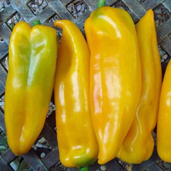Paprika Corno di toro giallo - Obrázok č. 1
