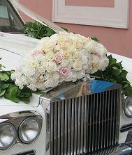 růže nádhera