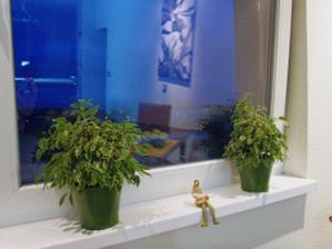 nove kvetinace uz na okne