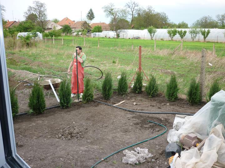 Náš domec - začali sme sadiť tuje
