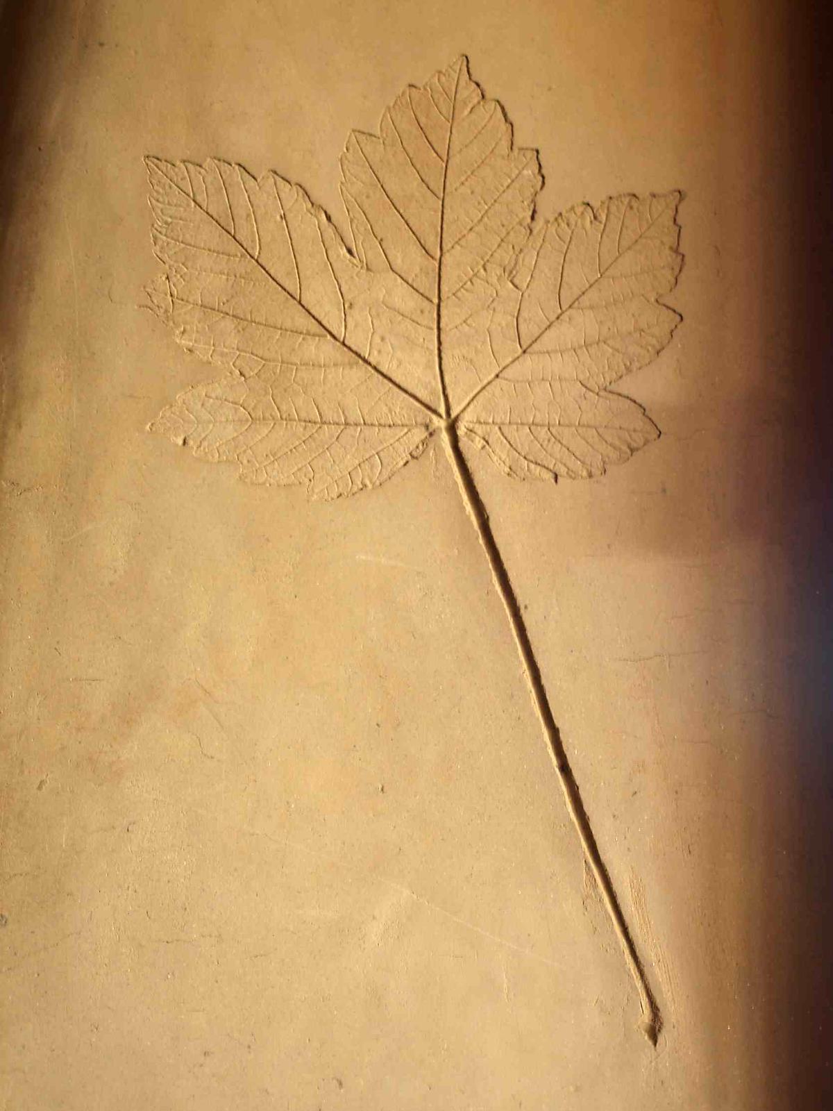 Hlinené omietky a podlahy svojpomocne. - Ten istý javorový list, len lepšie nafotený.