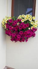 Moje kvetinky
