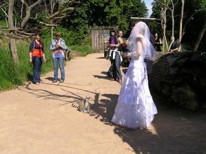 Velká atrakce - nevěsta v ZOO