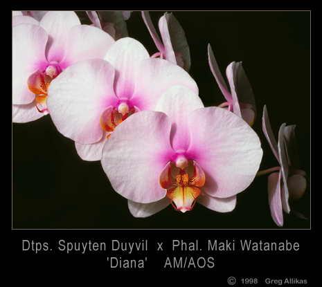 Ajajaj uz len 3 tyzdne..:) - svadobna kytica z takychto orchidei