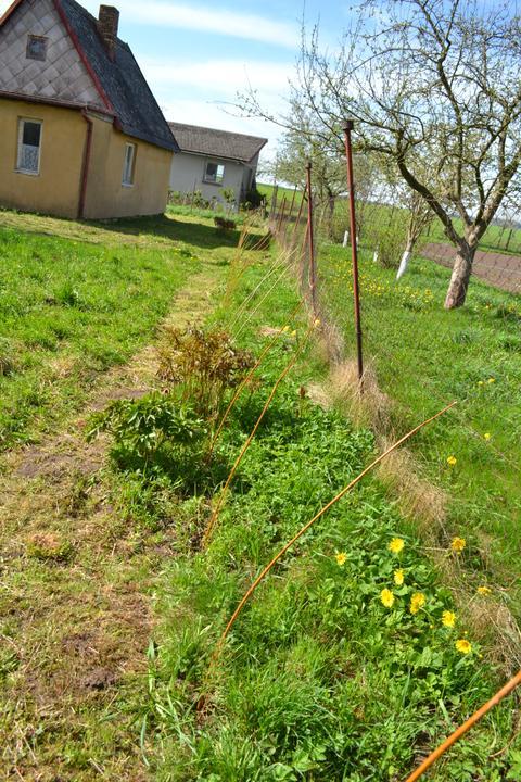 Naše chaloupka a zahrádka - budoucí živý plot z modřínků